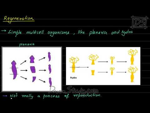 Class 10 Science - How do Organism Reproduce