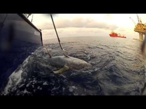 Louisiana Offshore Tuna Fishing