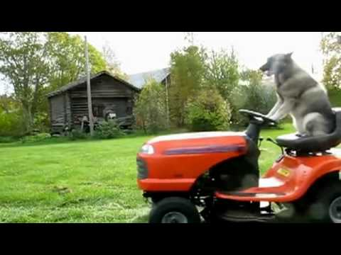 Cat Mowing Lawn Gif