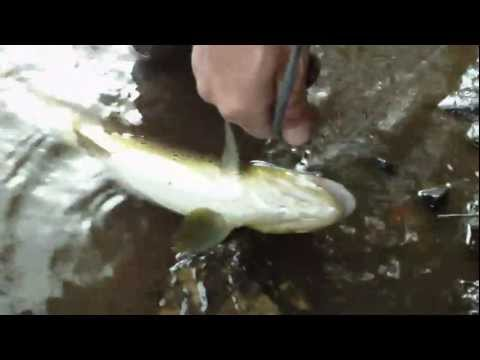 Pennsylvania Fishing,Lehigh gorge Trout fishing trip June 2010