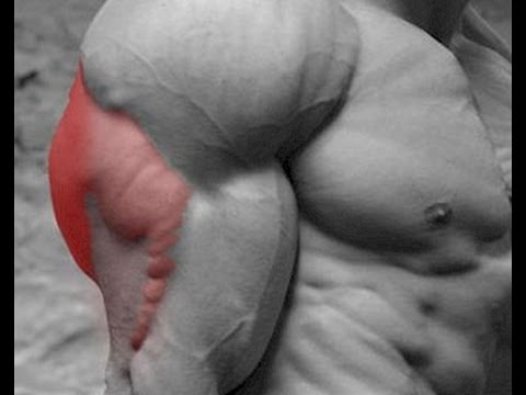 4 Exercises that hit all 3 Triceps Heads Image 1