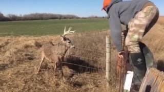 KS Deer Rescue