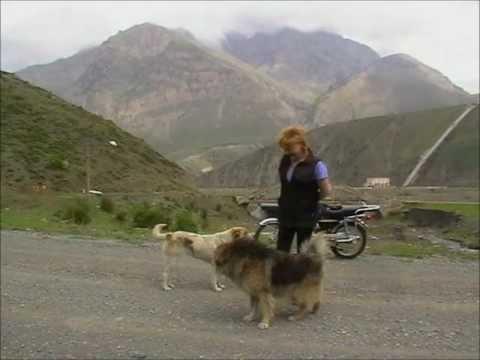 """фото с собаками на перевале.  Стас Михайлов """"мой друг"""""""
