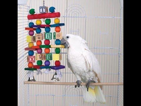 Как сделать 2 игрушки для попугая Doovi