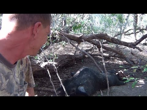 Big Texas Boar and a Small Sow by AR15