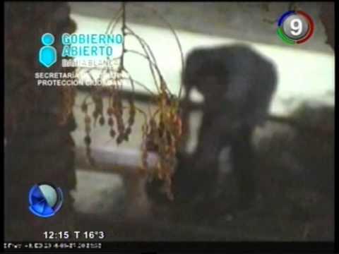 Canal 9 Bahía Blanca - Varios asaltos en pleno centro y violencia de genero