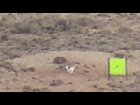 Top 5 Long Range Shots - 300 Win Mag - 208 gr Amax Bullet