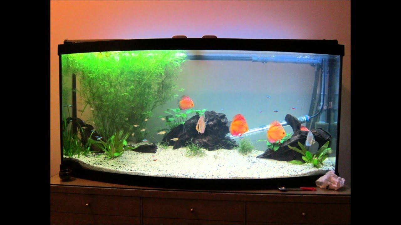 Sarah And Gerrard S Discus Aquarium 1st Year Youtube