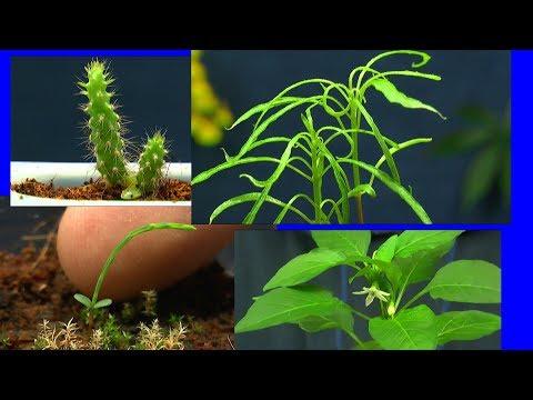 Pflanzen In Der Anzucht Updates Exotische Pflanzen Wie Sie Wachsen Und So