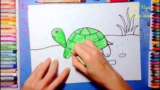 How to draw a turtle- coloring turtle - Vẽ con rùa - Hướng dẫn vẽ con rùa