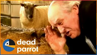 """Chirpy Burpy Cheap Sheep"" 