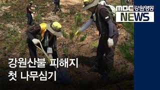 투R)강원산불 피해지 첫 나무심기