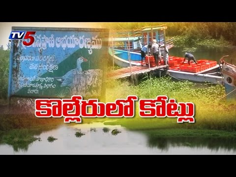 Kolleru Lake | Special Report on Illegal Fish Ponds : TV5 News