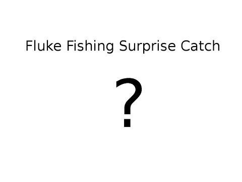 Fluke Fishing Surprise Catch