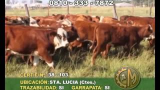 CyM 08 04 15 CERTIF 103