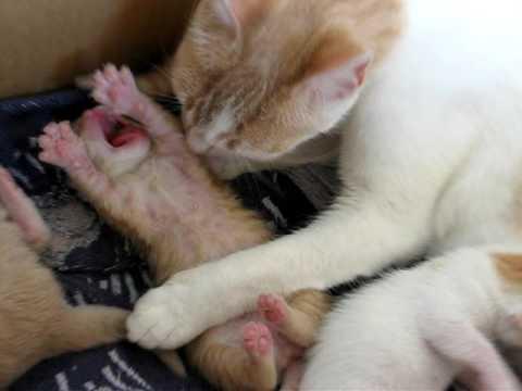 Mamma gatta e i suoi piccoli dopo una settimana youtube for I gattini piccoli