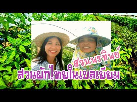 สวนผักไทยในต่างแดน สวนพรทิพย์เบลเยียมby Eidsy Easy