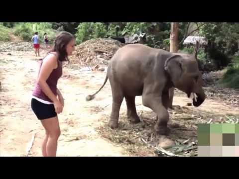 Compilacion Animales molestando Chicas