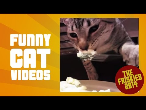 Best Cat Video Compilation - The Friskies Awards 2014
