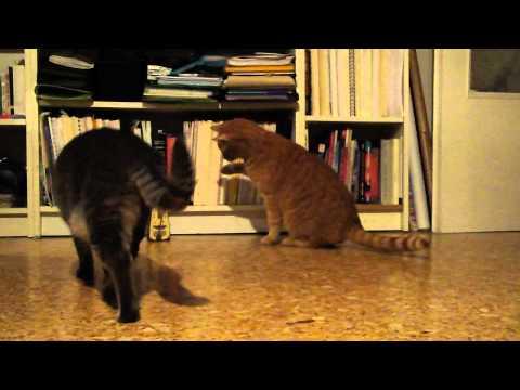 Gatos - Gato al ritmo de reloj metrónomo