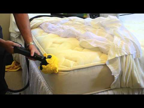 How to steam treat a sofa infested with bed bugs how to save money and do it yourself How to remove bed bugs from couch
