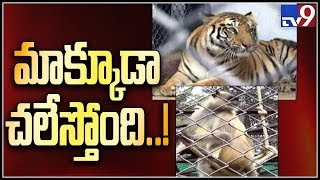 Wild animals shiver at Zoo after cold wave in Hyderabad