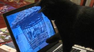 Cat Watching Birds Online