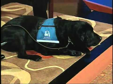 STL TV Live: Support Dogs Inc. (1 of 2)