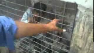 Adam khor caught in Nawabshah .mp4
