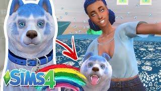 A FAMÍLIA ARCO-ÍRIS #02 CLONARAM MEU CACHORRO  - The Sims 4 - JR E MI