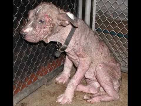 stop!! animal abuse (very very sad) will make you cry !!!!warning some horrible pictures!!!!!