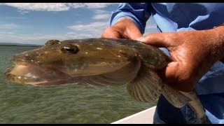 YANK FLATHEAD ON LURES - YouFishTV