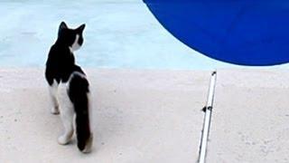 Chuyen la - Ảo giác dưới bể bơi