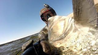 Подводная охота на толстолобика