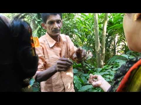 Kerala - Spice Garden - The importance of Spices in our daily life