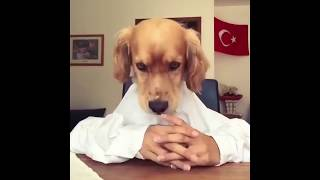 Download Lagu Funny cats and dogs - Try not to laugh - Compilation 2018 Gratis STAFABAND