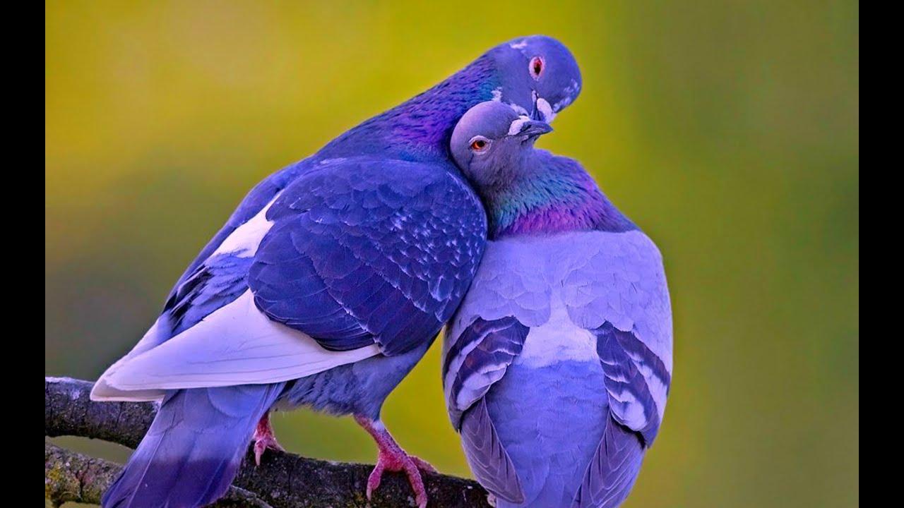 Beautiful Love Birds Picture Beautiful Love Birds of