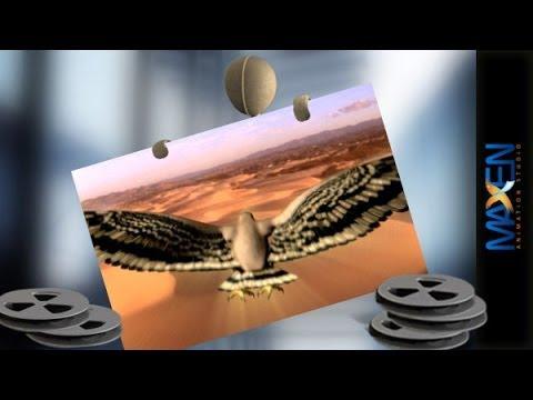 هوك العالمية اليمن - Hawk International Yemen