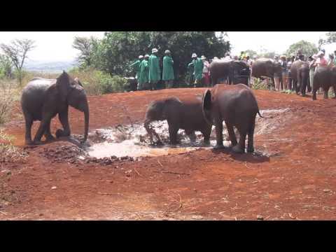 Elephant Sanctuary - Nairobi, Kenya