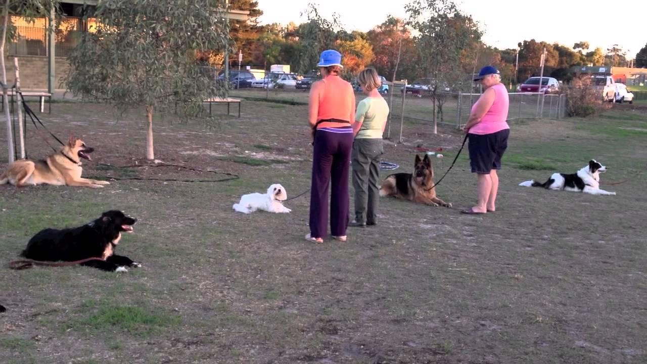 Andre S Frankston Dog Social Group Youtube