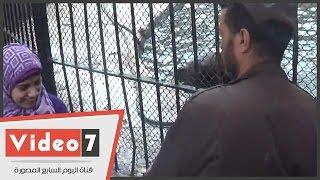 بالفيديو.. أنثى كلب البحر تداعب طفل فى حديقة الحيوان