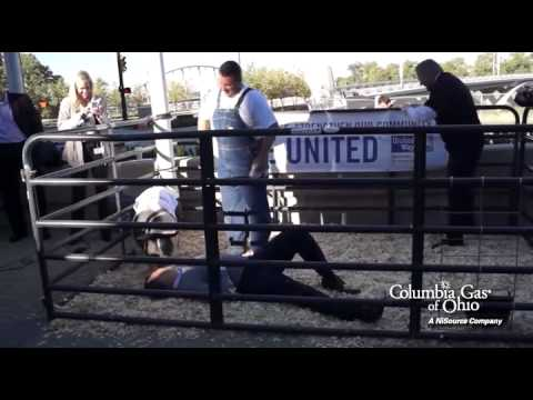 Columbia Gas - United Way Campaign Pig Kissing