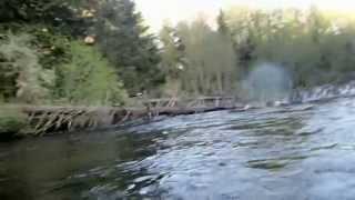 EXTREMADAMENTE INCREIBLE Chequen lo que hace esta aquilas encima de un lago [VIDEO]