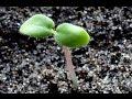 Tohum Ekimi - Tohumla Çiçek Ve Sebze Yetiştirmede Temel Kurallar