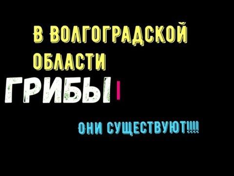 Грибники волгоградской области в контакте
