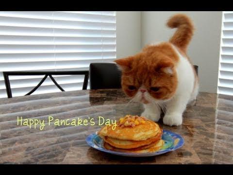 happy pancake com Kemijarvi