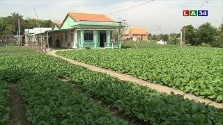 Chuyện nhà nông: Nông nghiệp ứng dụng công nghệ cao | LATV