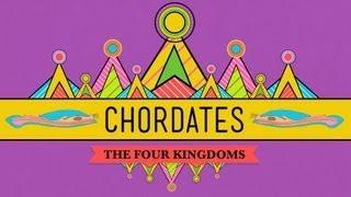 Chordates - CrashCourse Biology #24