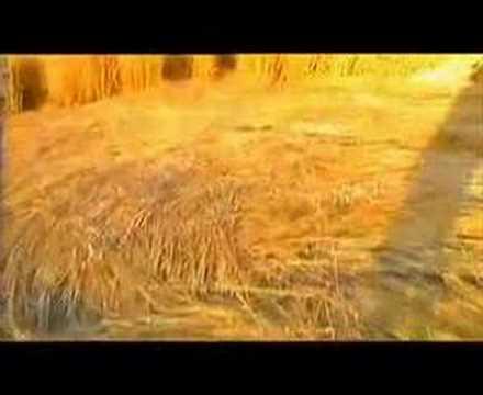 Dokument kruhy v obilí, 2.díl