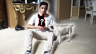 SURPRISING BOSLEY FOR HIS BIRTHDAY!! (OUR NEW PET)